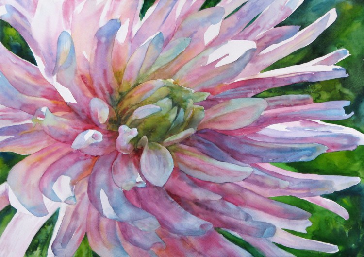 Watercolor painting. Flower aster