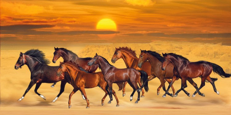 Brown seven running horses on sea cost sunshine natural background