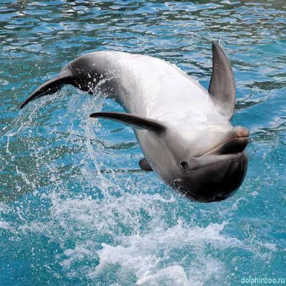 Dolphin Pictures3