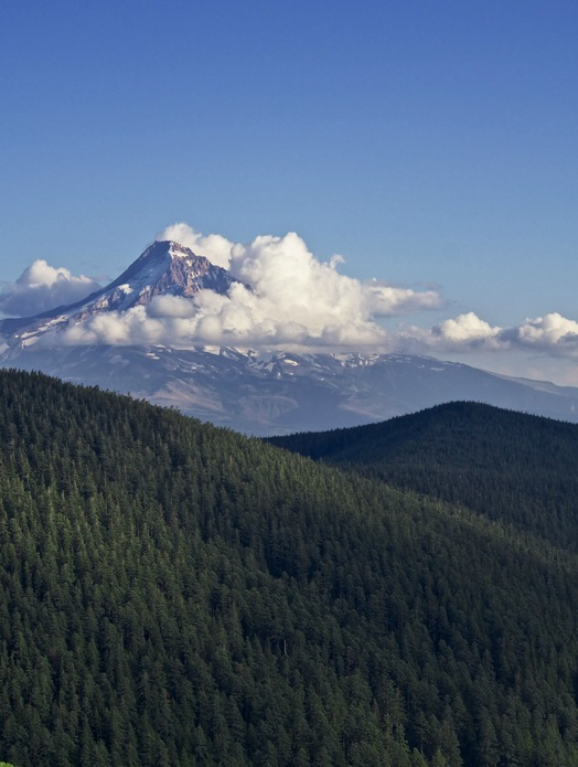 Behold beautiful Mount Hood as seen from Chinidere Mountain