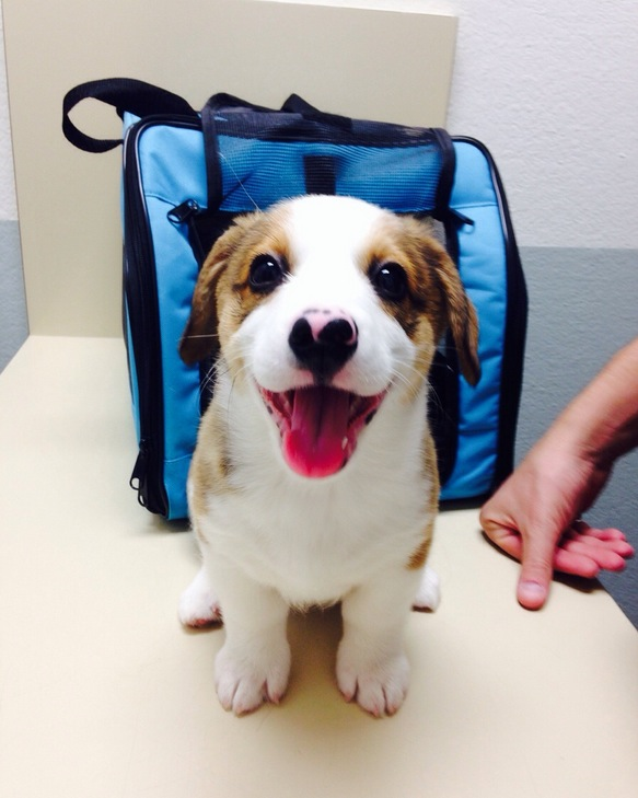 Winston was fearless for his first vet exam