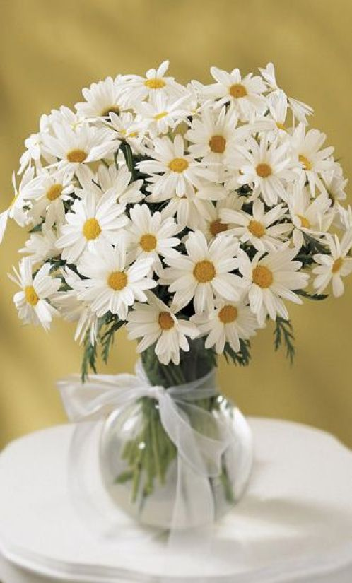 Daisy Images3