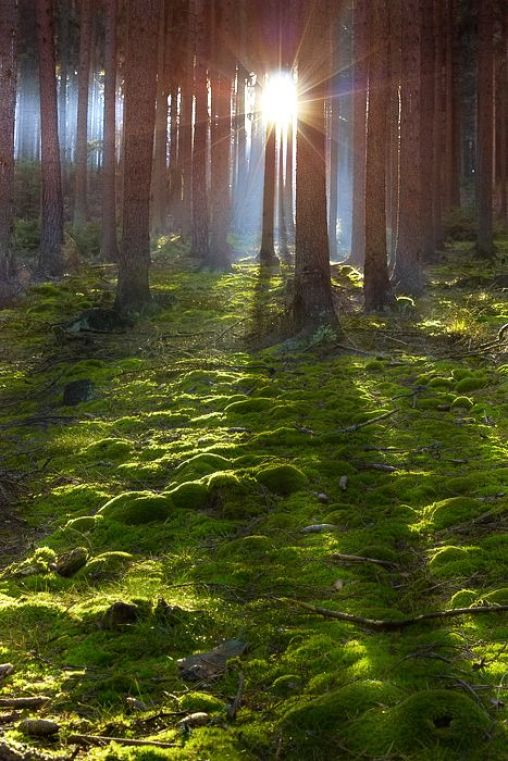 Forest pictures 2