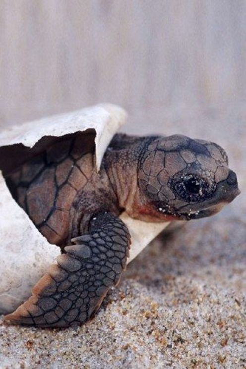 Pictures of Turtles7