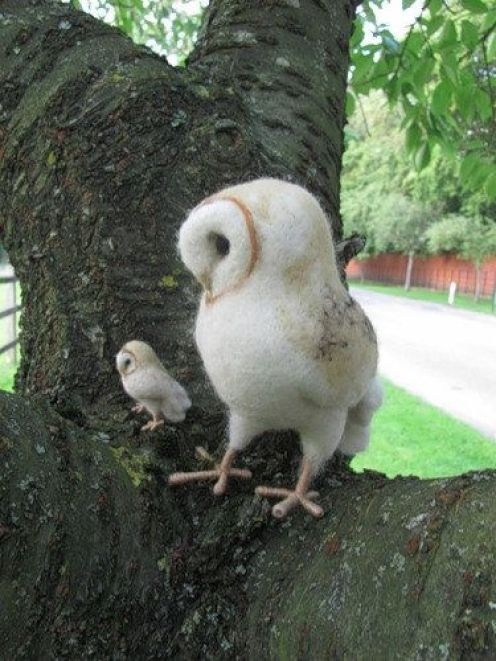 owl pictures3