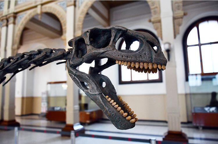Chilesaurio: el excéntrico reptil extinto protagoniza la reapertura del Museo de Historia Natural