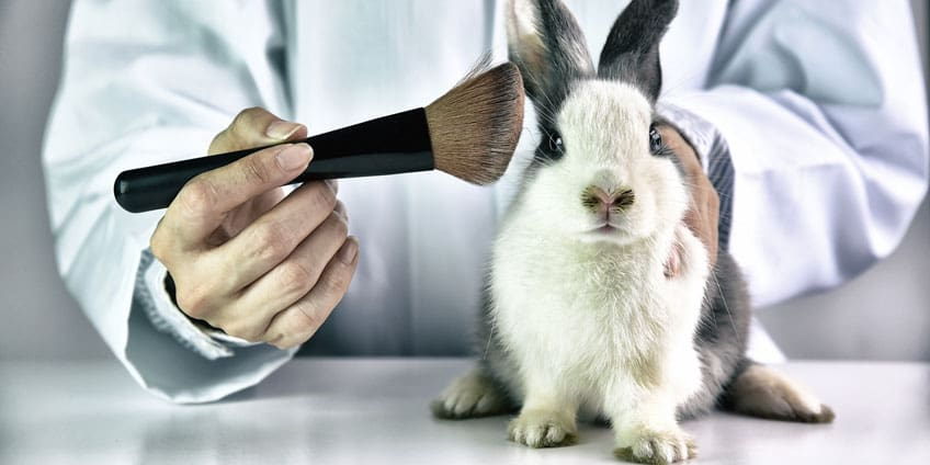 Essay on Animal Testing pro arguments  Coolessaynet