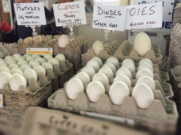 Jean Talon Market Montreal eggs