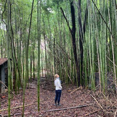 a photo of a person standing amid a grove of bamboo looking up into the canopy