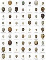 eggmagnets.jpg