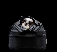 sleepypod-blackandwhite.jpg