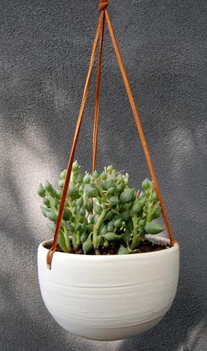 pidgeon-ceramics-plant.jpg