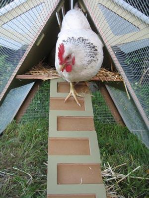 ChickenCribs2.jpg
