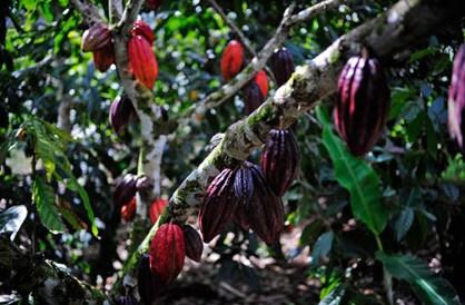 AmmaChocolates-image5.jpg