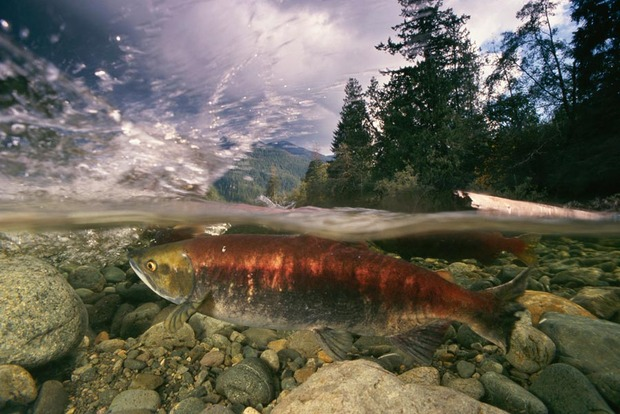 Patagonia-Salmon-Jerky-3.jpg