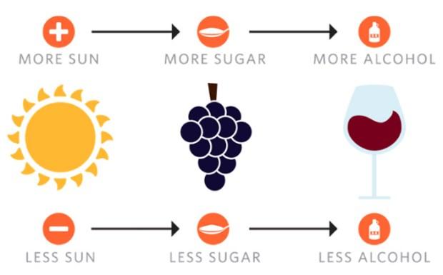 wine-simple-1.jpg
