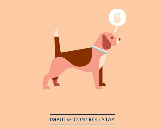 dog-training-app-2.jpg