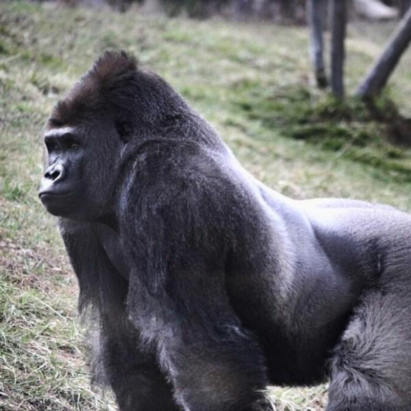 Valitse. Gorilla Wear Womens New Mexico Cardio Shorts | Musta Pinkki.