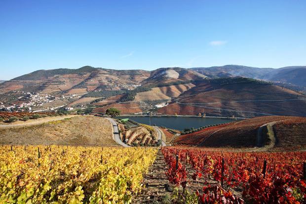 esporao-wines-1.jpg