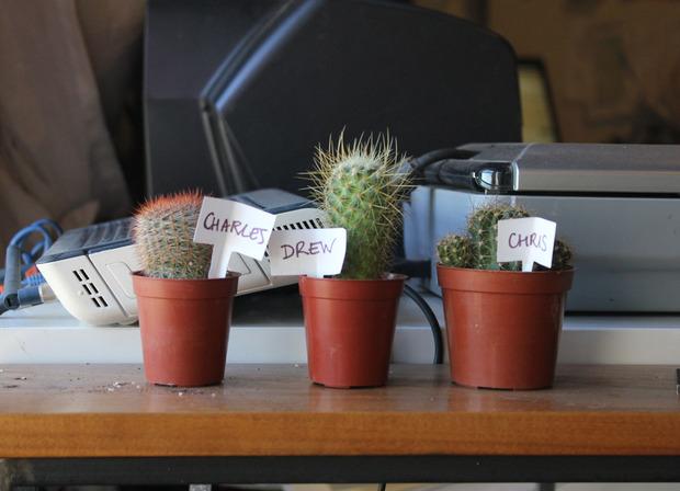 ThePrincipals-cactus.jpg