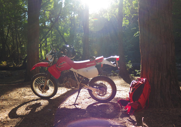WC05-bike-sunflair.jpg