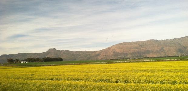 blue-train-south-africa-field-2.jpg