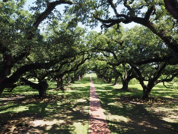OlympusTrees.jpg