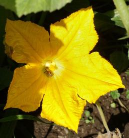 arlos-honey-farm-kelowna-2.jpg