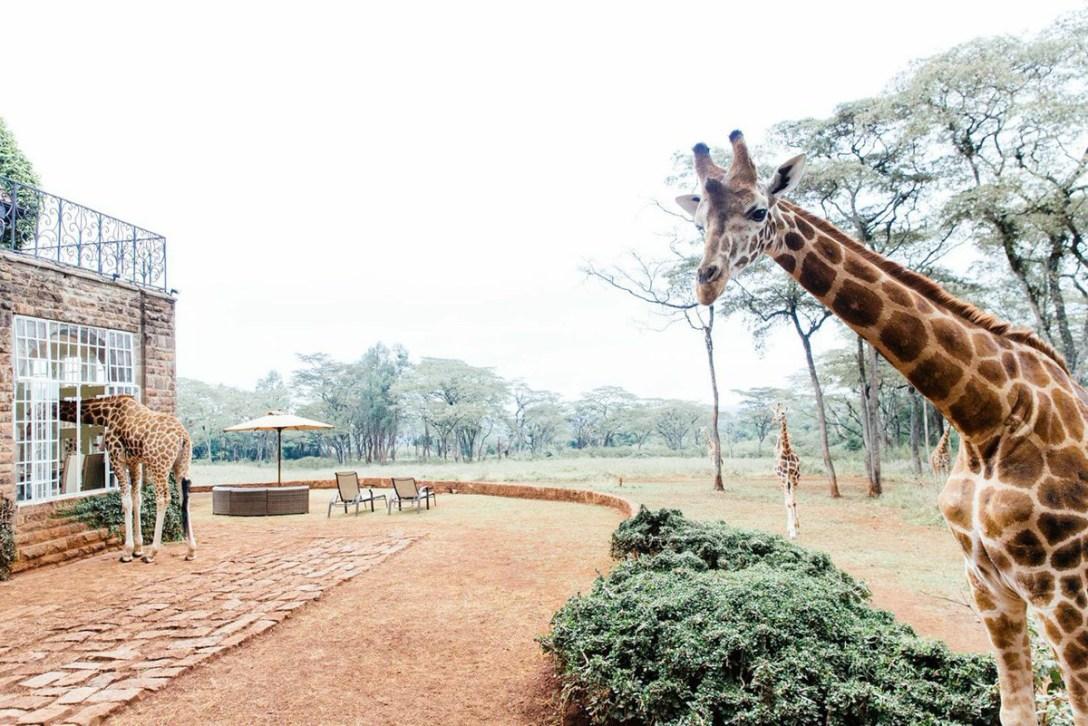 GiraffeManor-Nariobi-01.jpg
