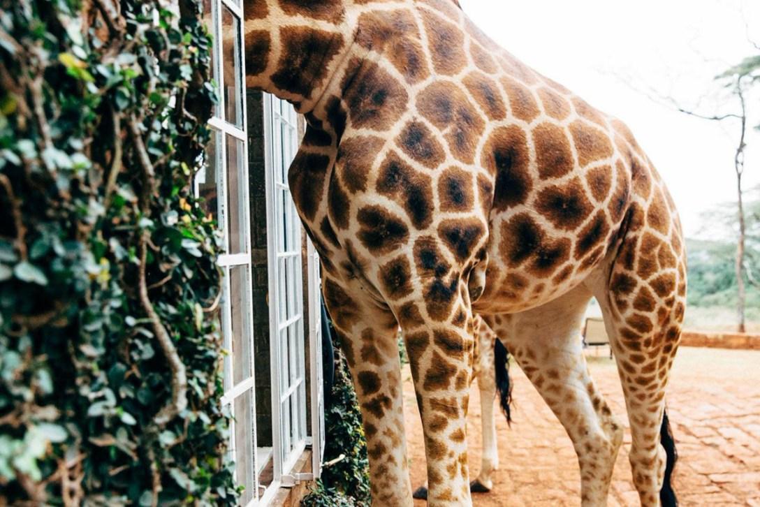 GiraffeManor-Nariobi-07.jpg
