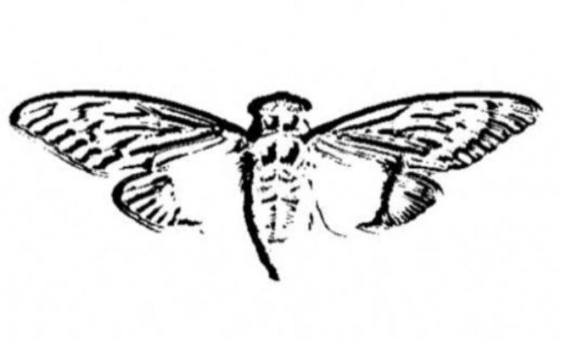 Wat is het mysterieuze online spel Cicada 3301?