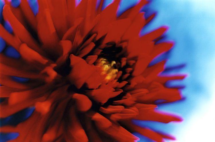 La flor de colores vividos de Mika.
