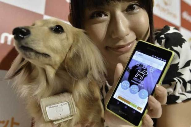 El collar inteligente para perros de Ntt Docomo