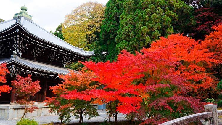 Chion-in_momiji