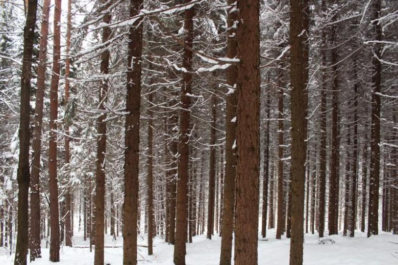 woods in the winter