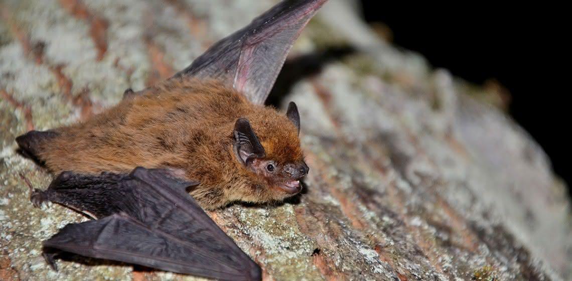 Bats in Ljubljana