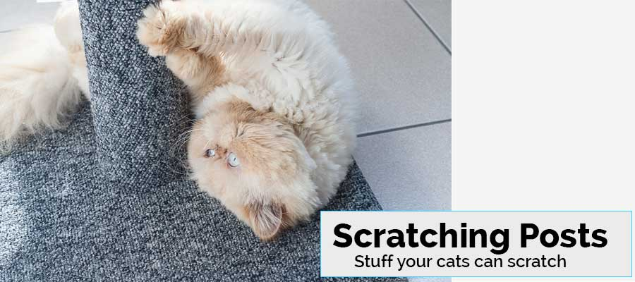 Cats love to scratch and these scratching posts are purrfect for that! Save your couch and invest in a good cat scratcher today!