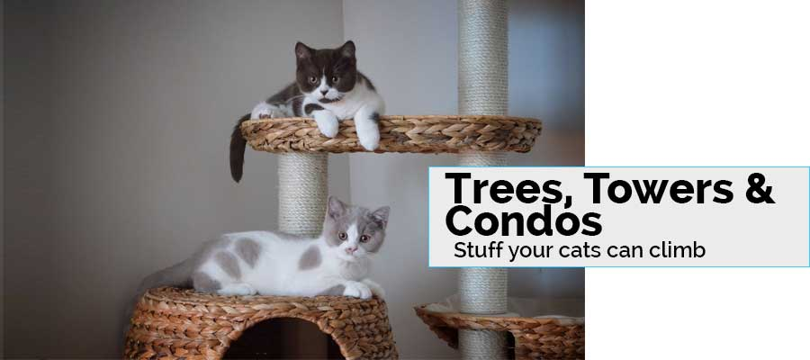 cat trees towers and condos. Stuff your cats can climb