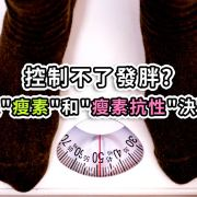 """控制不了發胖?其實是""""瘦素""""和""""瘦素抗性""""決定胖瘦"""