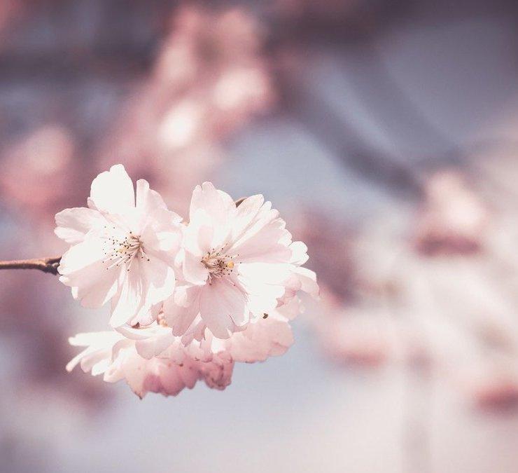春天好好養肝、膽,就能避免更年期的許多慢性病。