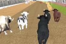 Angry Bull Race