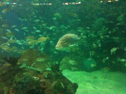 Peces arrecifales