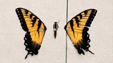 Photo of Paramore – Brand New Eyes (Deluxe Version) (iTunes Plus) (2009)