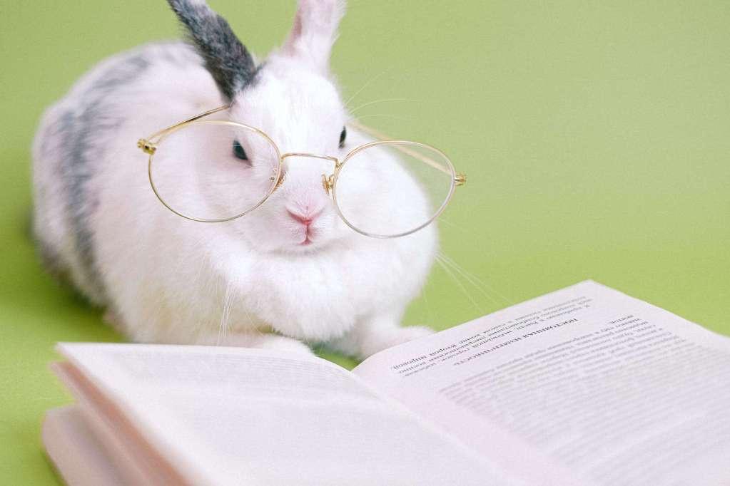 cute rabbit with eyeglasses