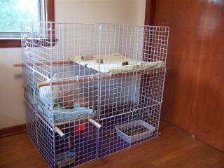 rabbit enclosures