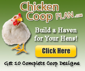 chicken coops and runs