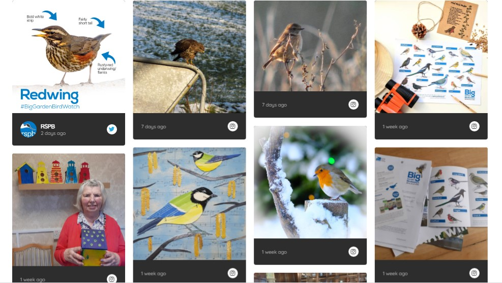 a selection of images on the RSPB garden birdwatch site