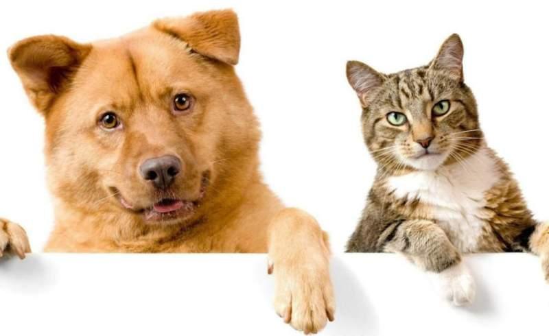 Sokak Hayvanlarına Bağış Kampanyası 2 cop degil kopek mama 2