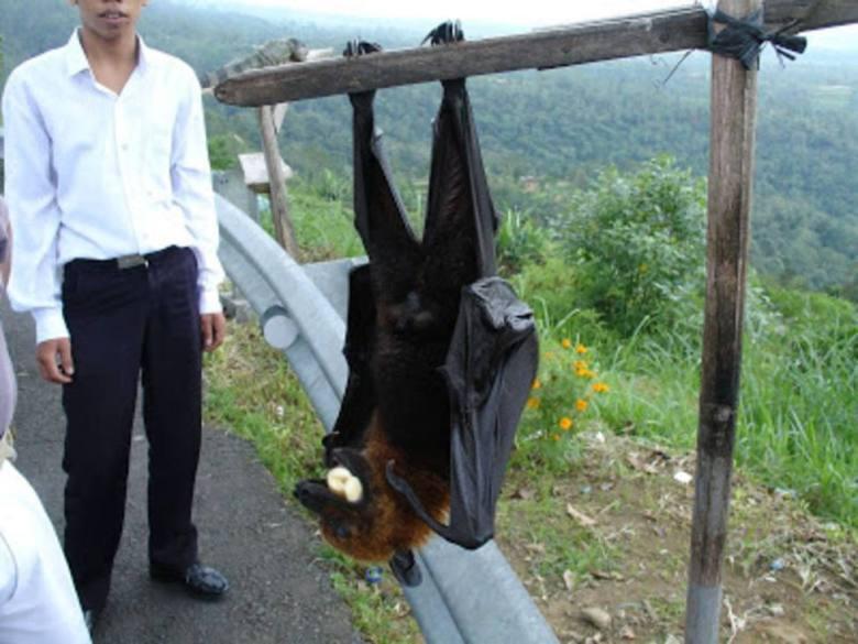 El murciélago filipino