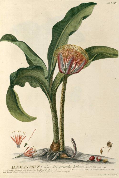Ilustracin botnica en la historia ciencia y arte